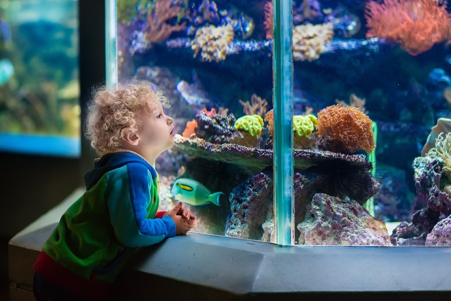 kids at electric city aquarium