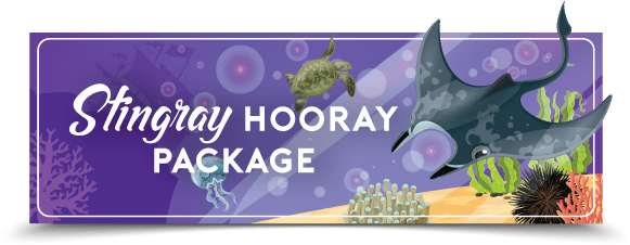 stingray hooray package electric city aquarium