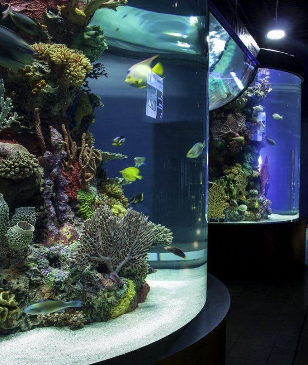 Electric City Trolley Museum In Scranton Pa Home: Zoos And Aquariums Near Scranton Pa